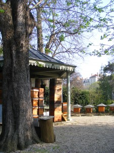 Rucher du jardin- Jardin du Luxembourg